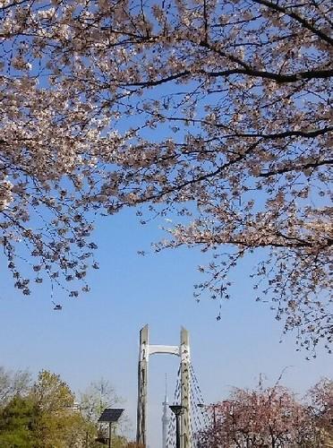 20190406_木場公園_02a06.jpg