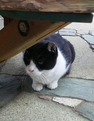 20200102_cat_06a.jpg