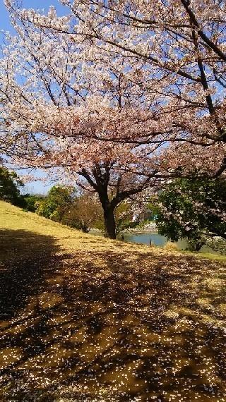 20200404_桜_02a.jpg