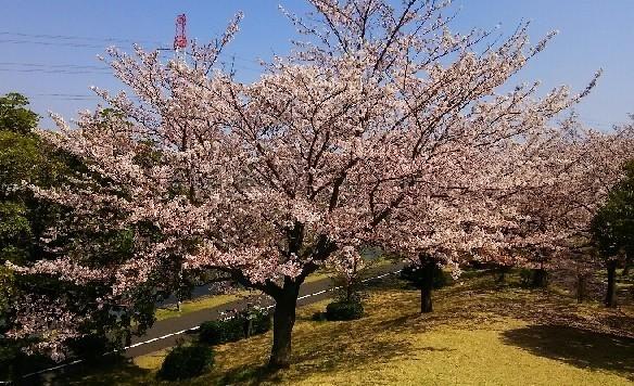 20200404_桜_03a.jpg