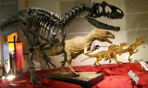 ギガ恐竜展2017_11a.jpg