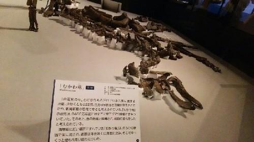恐竜博2019_むかわ竜_01a_7.jpg