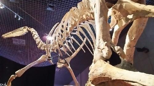 恐竜博2019_デイノケイルス_03a_5.jpg