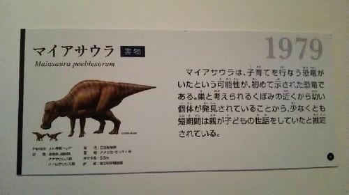 恐竜博2019_マイアサウラ_01a_9.jpg