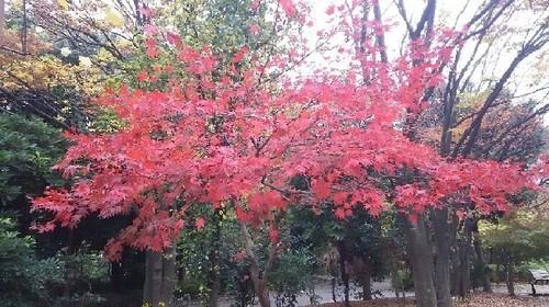 紅葉20161123_1a.jpg